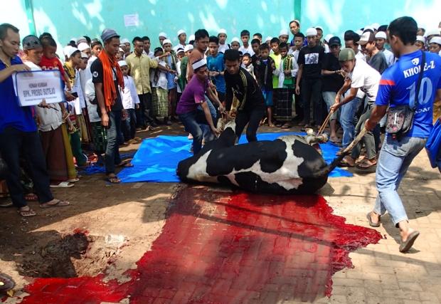 Idul Adha slaughter