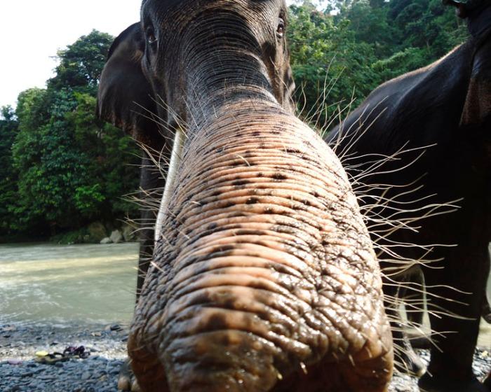 elephant3CB