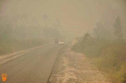 Driving on a smog-filled road in Central Kalimantan. Photo Credit: Centre for Orangutan Protection