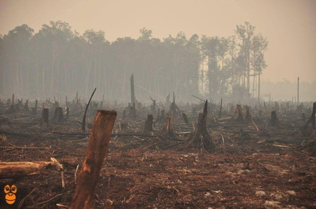 Burning the forest to make way for palm oil plantations.    Photo Credit: Centre for Orangutan Protection