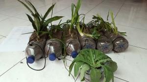 Plants in a bottle.