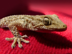gecko-1236523_960_720